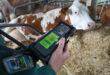 En el IPN trabajan para reducir las emisiones de metano en la ganadería mexicana