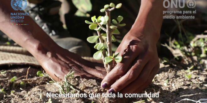 México participó en la Quinta Asamblea de las Naciones Unidas sobre Medio Ambiente
