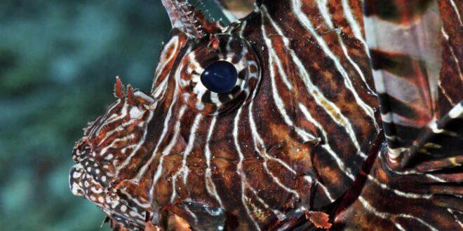 Combate a especies invasoras cuesta 162.7 mil millones de dólares